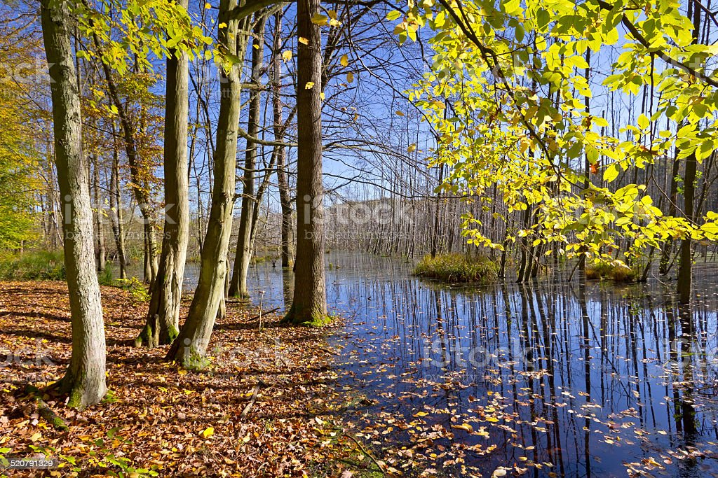Swamp in the Forest stock photo