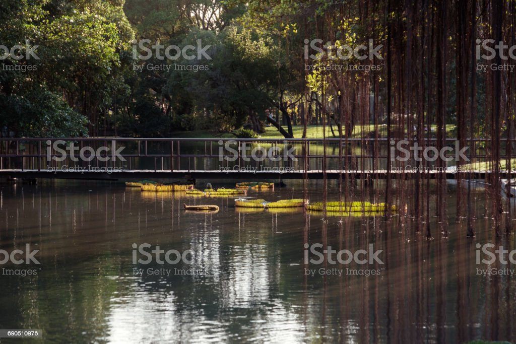 swamp in the park with Wood bridge. stock photo