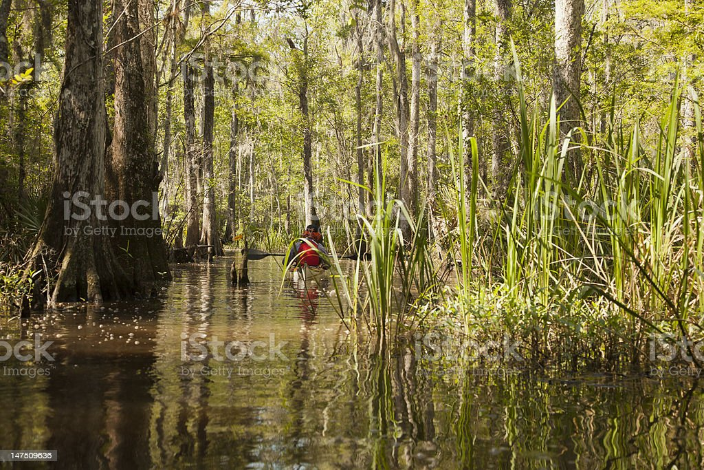 Swamp Kayaking stock photo