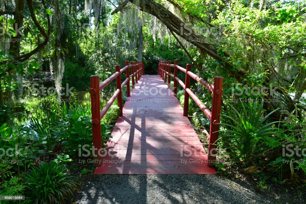 Swamp Lands In Charleston South Carolina Stock Photo - Download