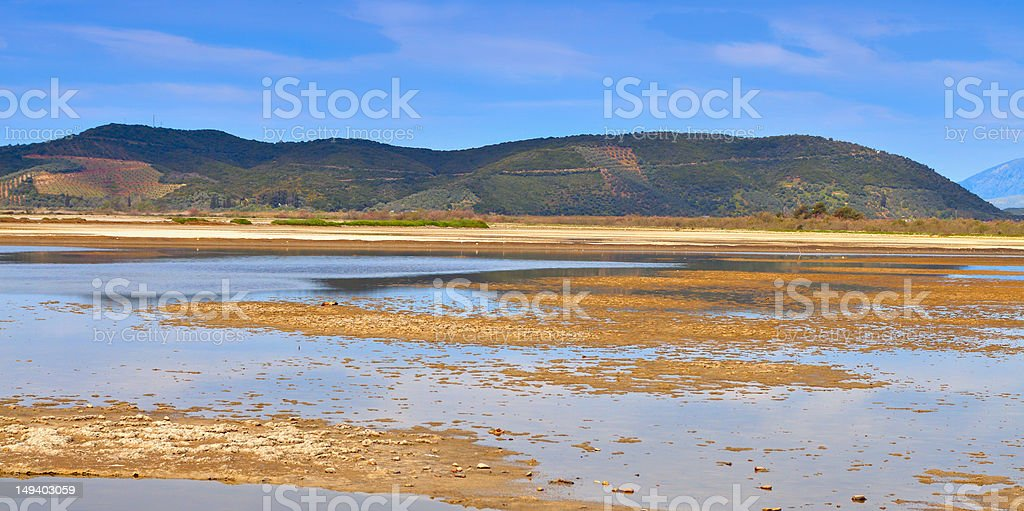 Swamp landscape in Europe stock photo
