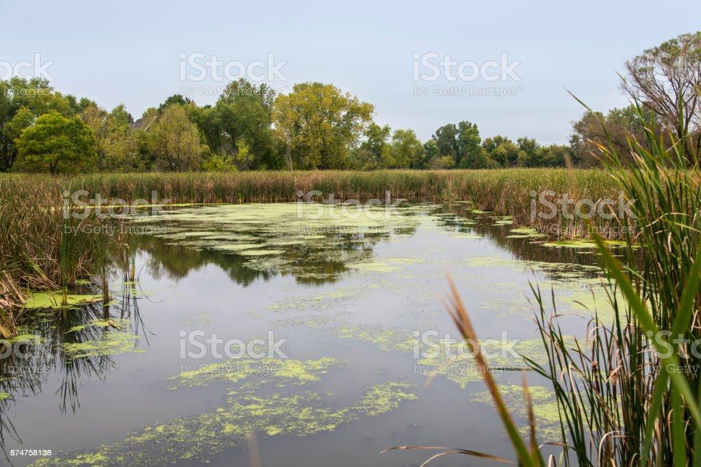 Swamp leading to Minnetonka lake stock photo
