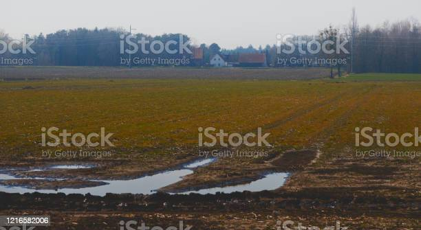 Photo of Swamp meadow in the moorland of northern Germany with a large puddle, tracks of the tractor, and a farm in the background