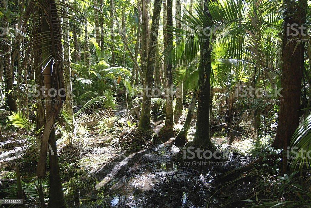 Swamp on Hinchinbrook Island royalty-free stock photo