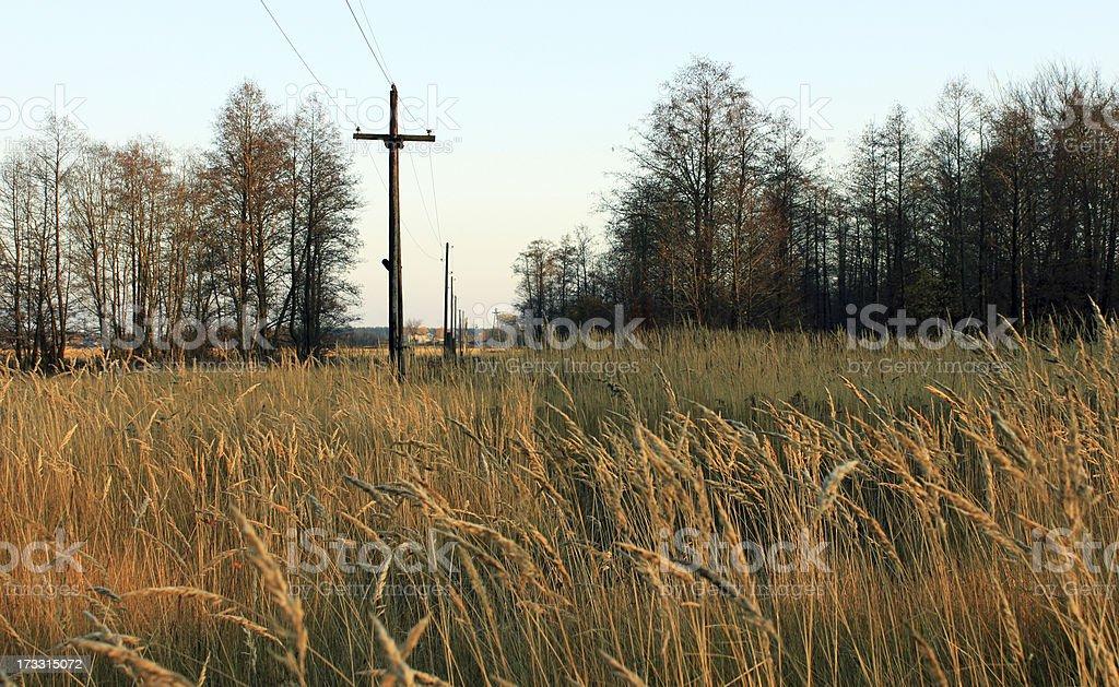Swamp royalty-free stock photo