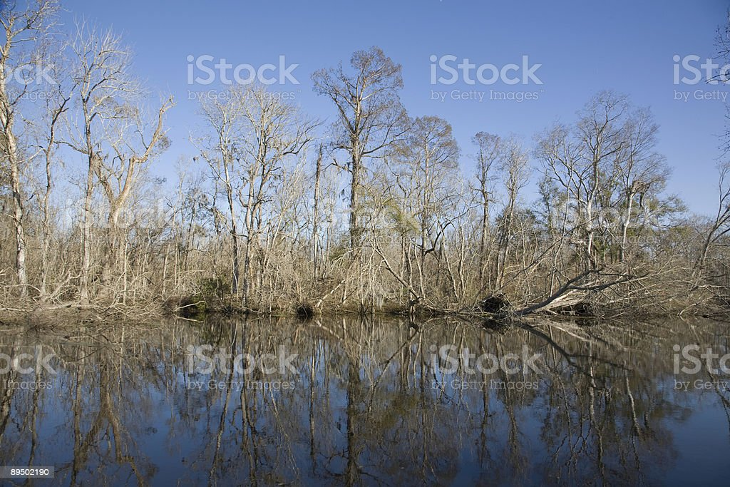 Swamp royalty-free stock photo