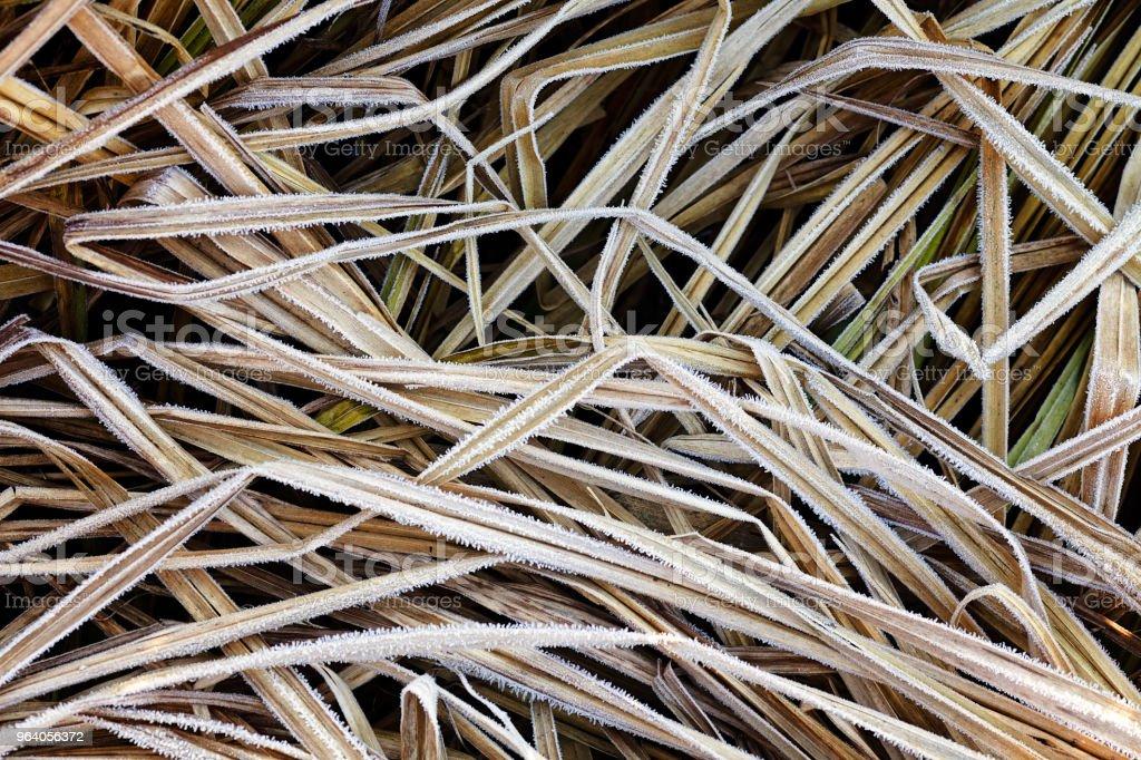 湿地の植物 - セルビアのロイヤリティフリーストックフォト