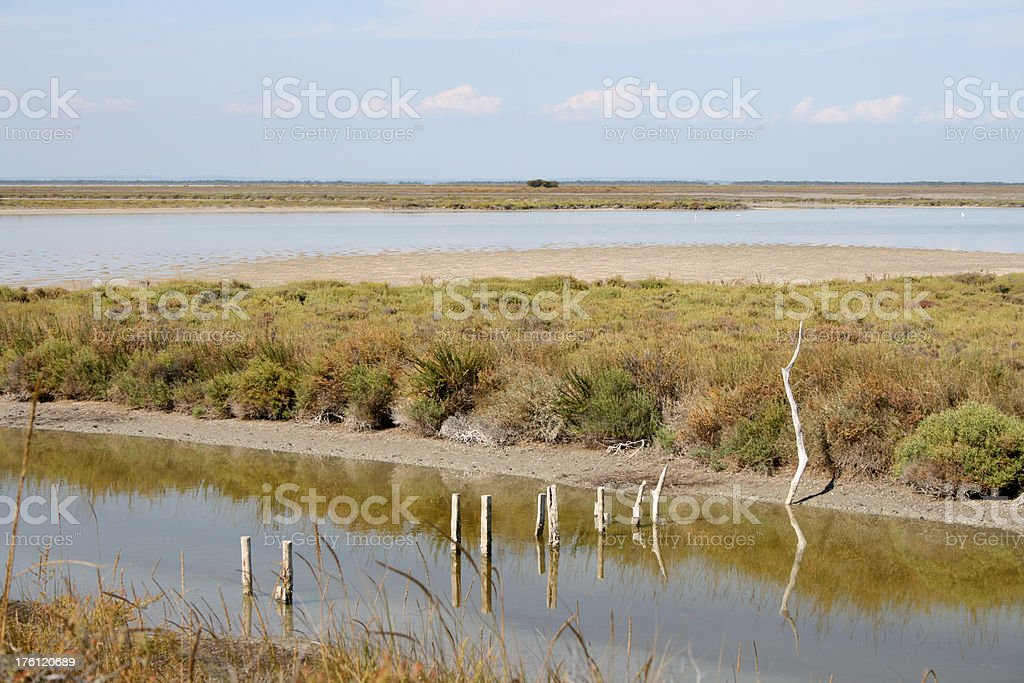 Swamp river in Camargue France royalty-free stock photo