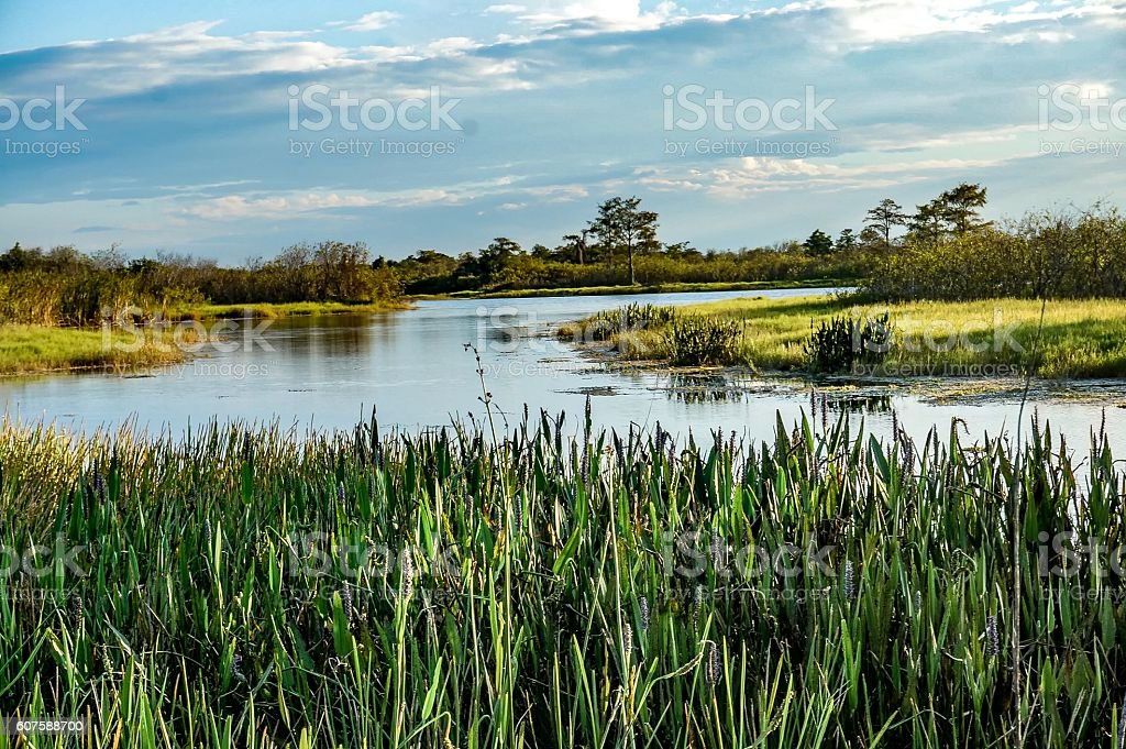 swamp river stock photo