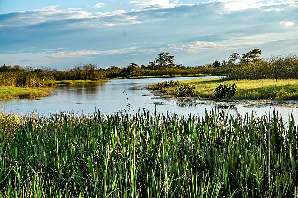swamp river stock photo