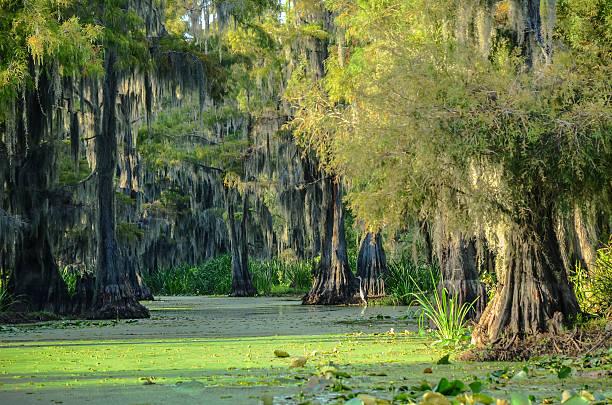 Swamp Scenic stock photo