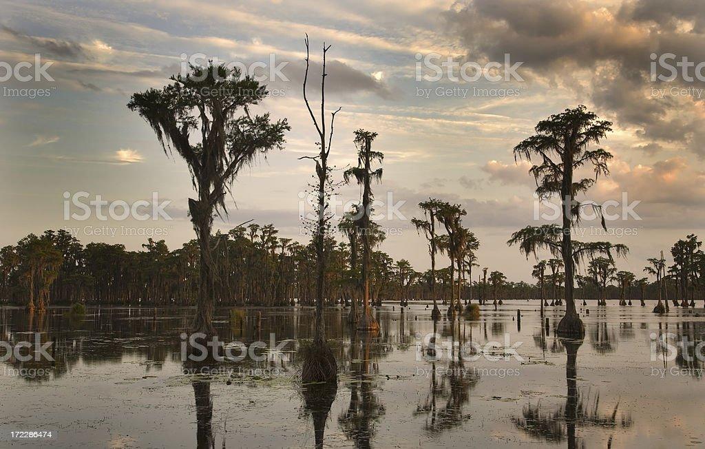 Swamp sunset royalty-free stock photo