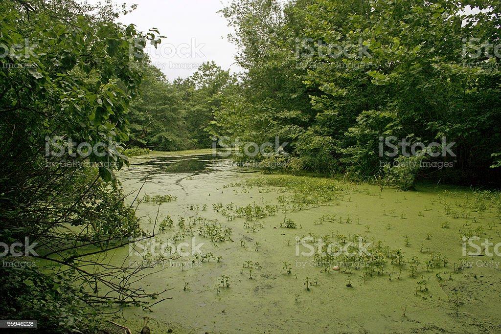 Swamp Thing royalty-free stock photo
