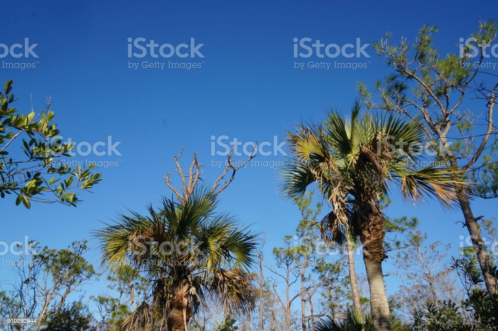 swamp trees in Florida stock photo