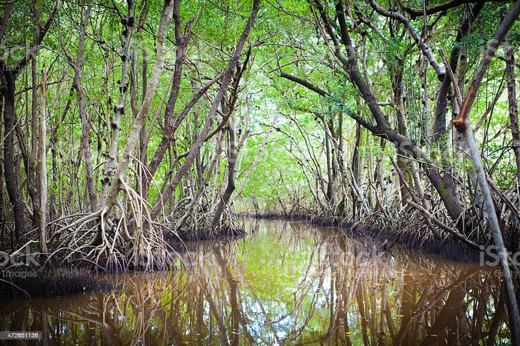 Swamp Wetland Mangrove Landscape in Everglades National Park, Florida USA stock photo