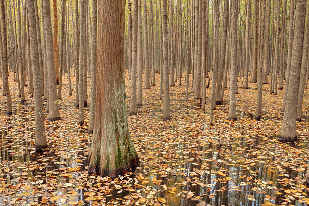 Swampland in the Fall stock photo