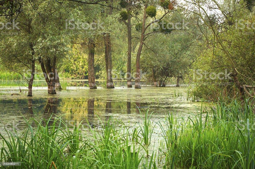 swampland royalty-free stock photo