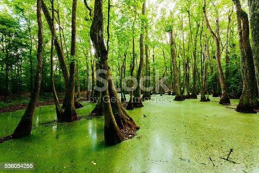 Swamps in Louisiana