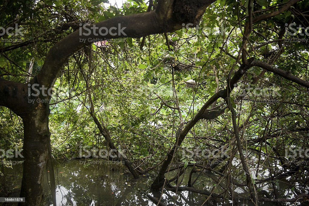 swampy forest foliage and trees royalty-free stock photo