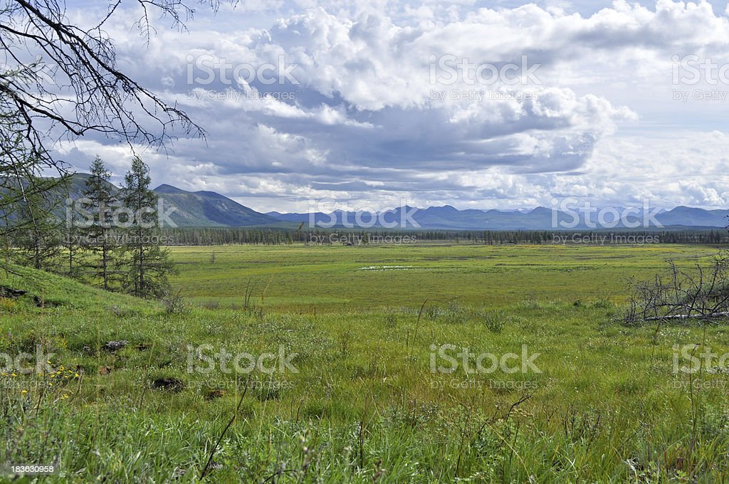 Swampy plain under the blue sky. royalty-free stock photo