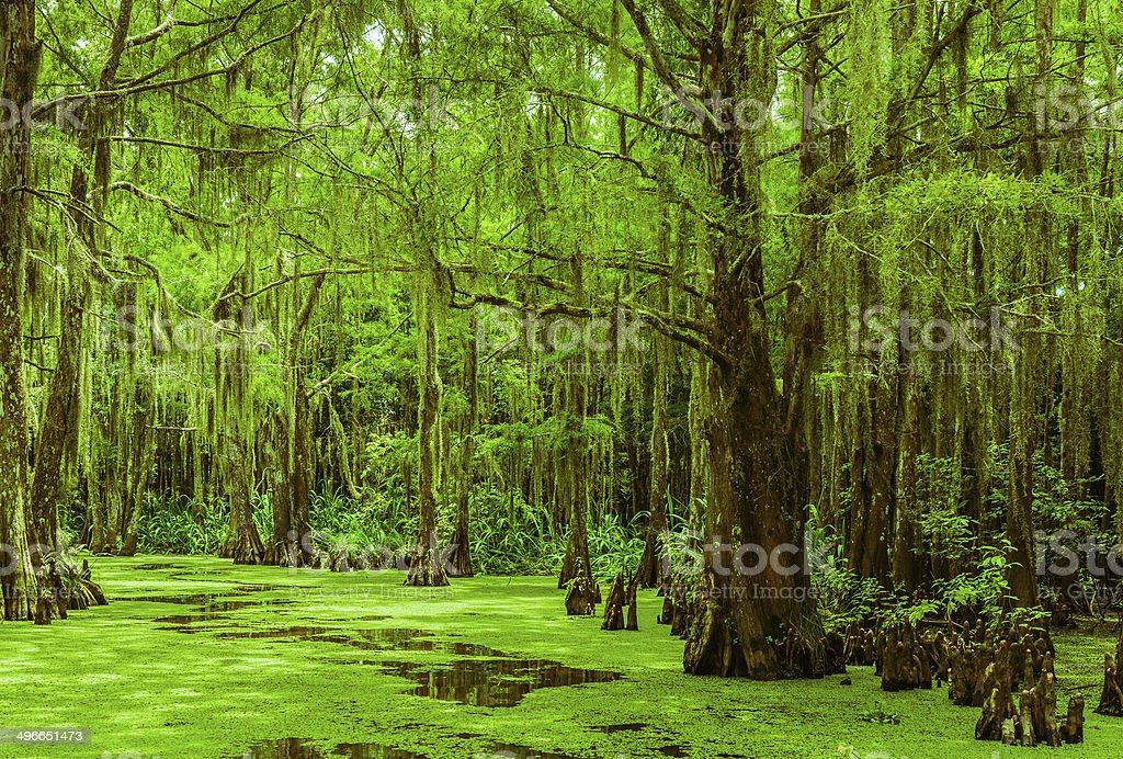 Swampy Trail stock photo