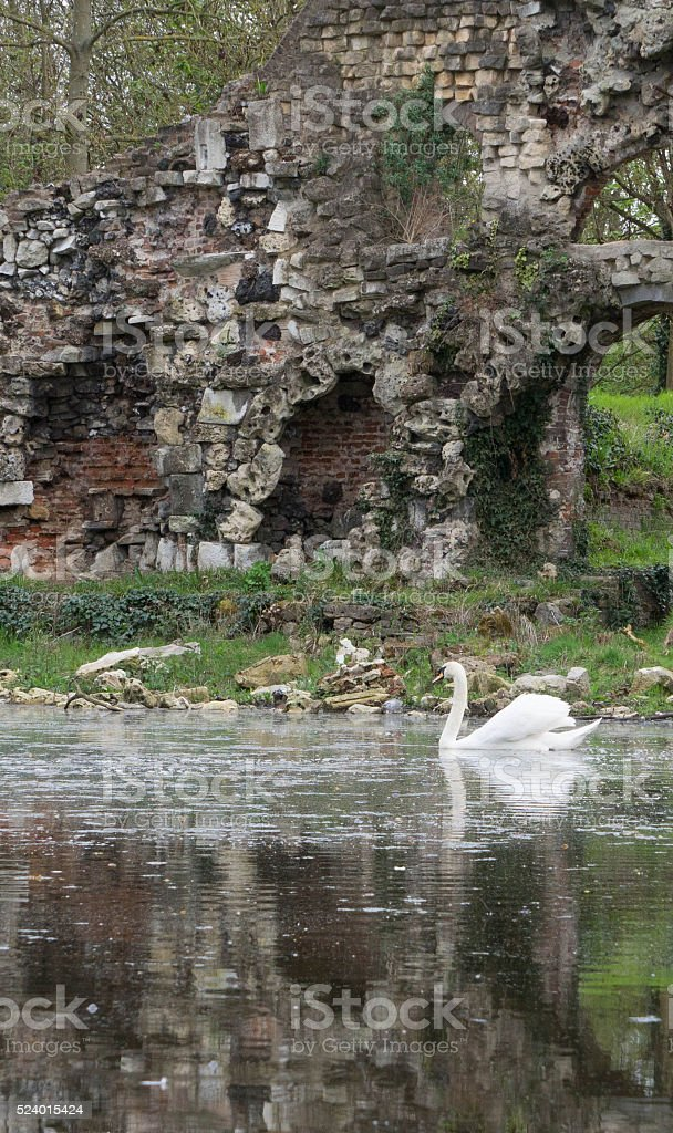 Swan and Ruin stock photo