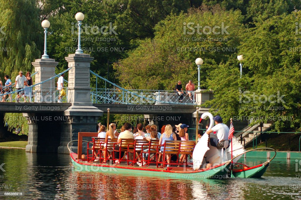 Swan boats in the public Garden stock photo
