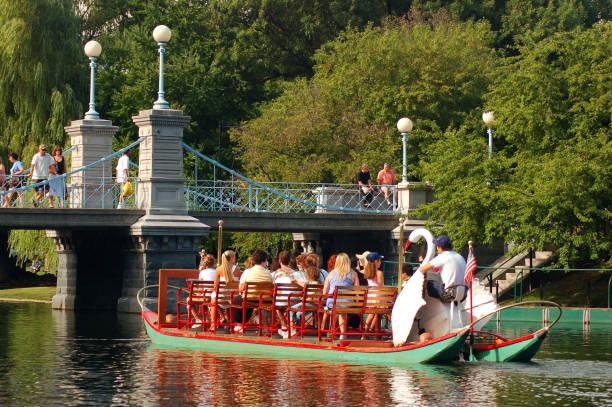 Swan boats in the public Garden stock photo