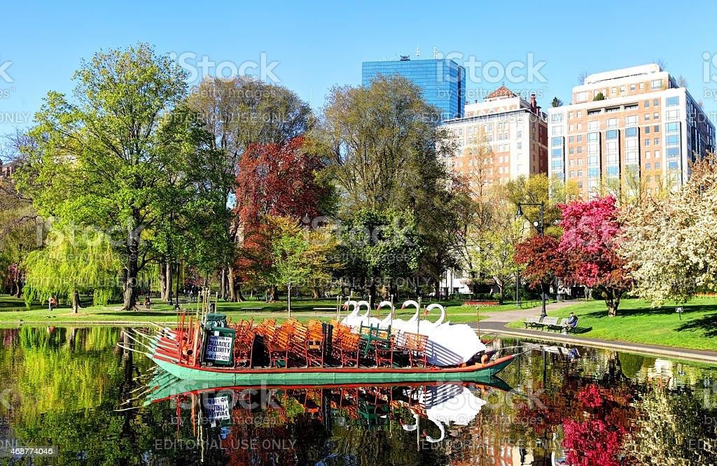 Swan Boats on the Boston Public Garden stock photo