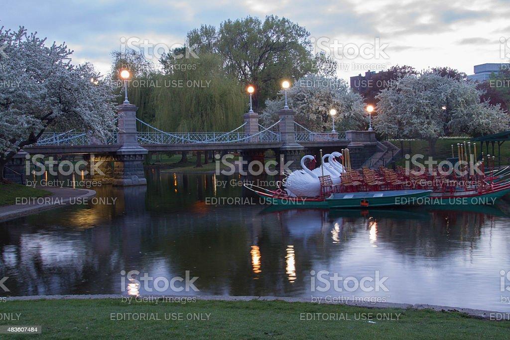 Swan Boats stock photo