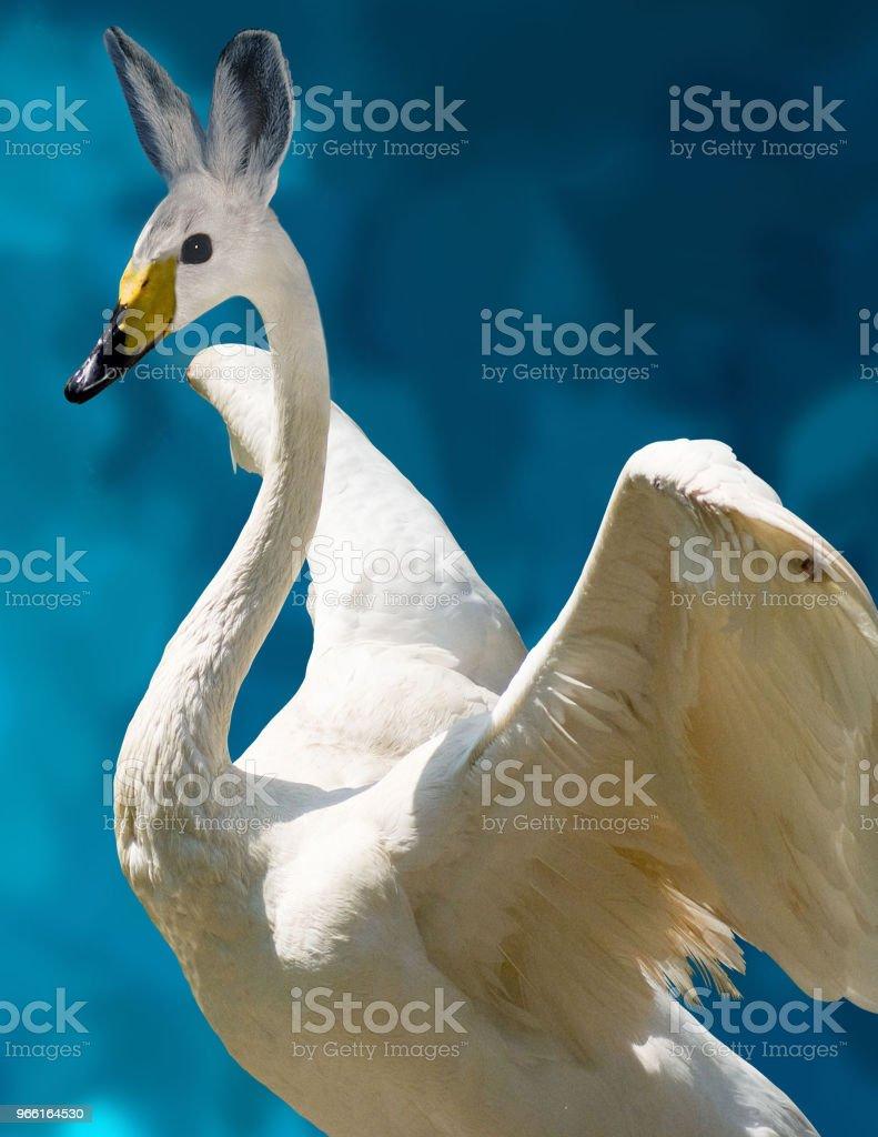 Swan Bunny, Chimera - Royalty-free Begrippen Stockfoto