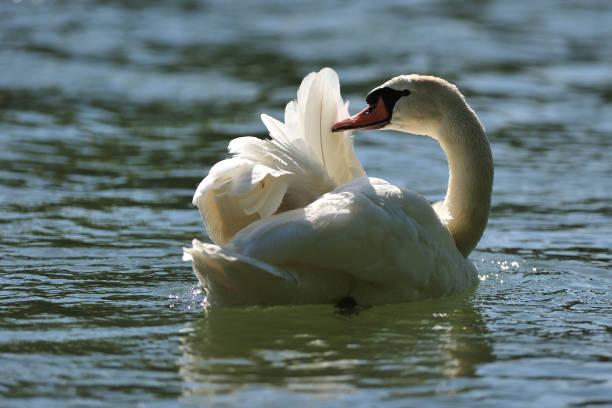 Swan Reinigung – Foto
