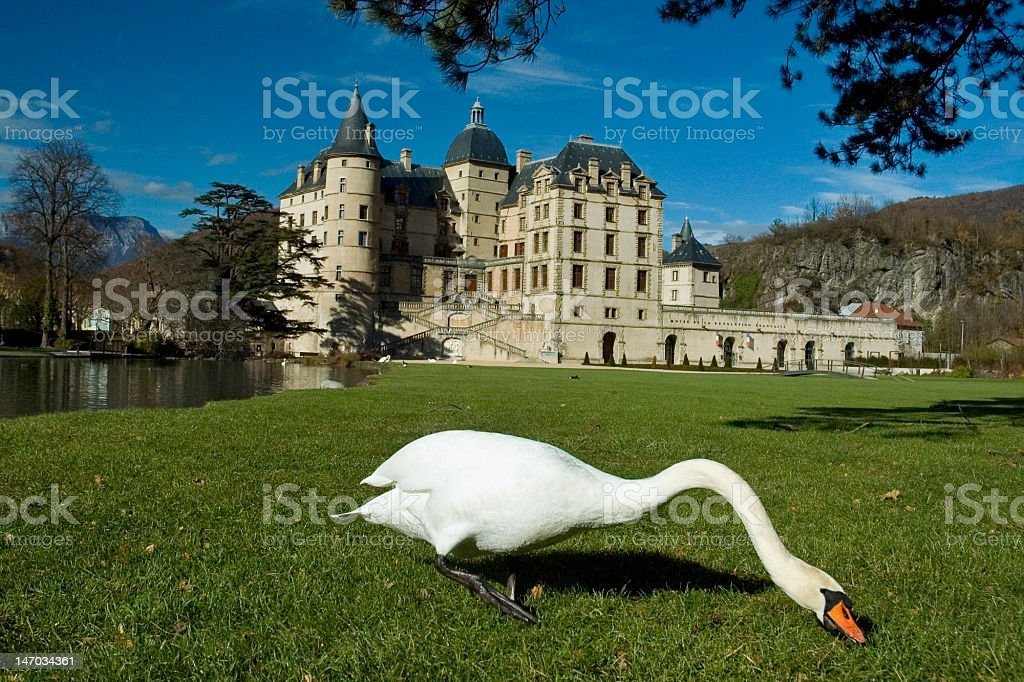 Swan in the castle of Vizille stock photo