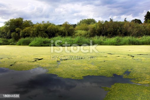 Algae growing on Swan Lake.Please see some similar pictures from my portfolio: