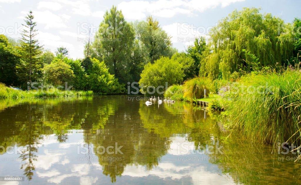 A Swan Lake stock photo