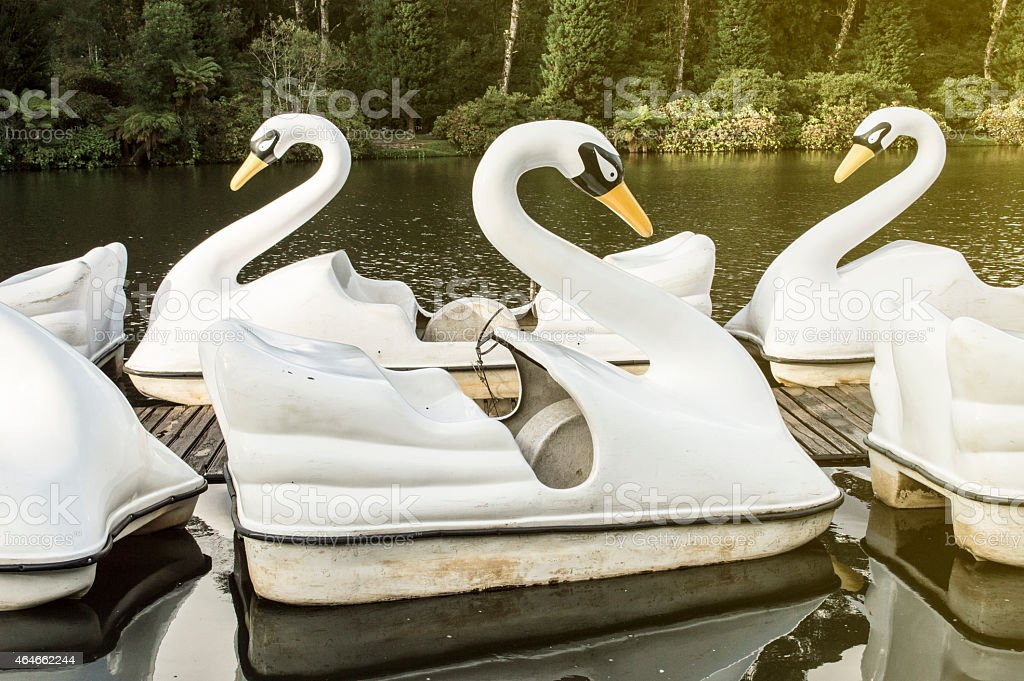 Swan paddle boat in the lake ready to serve stock photo