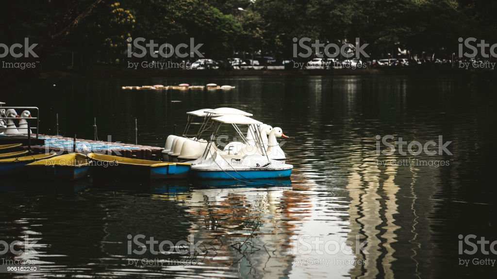Swan trampbåtar i Lumphini Park, Bangkok - Royaltyfri Bangkok Bildbanksbilder