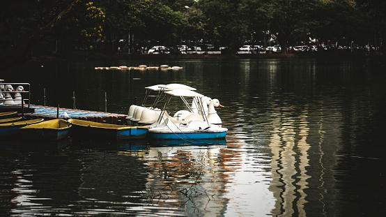 Swan Trampbåtar I Lumphini Park Bangkok-foton och fler bilder på Bangkok