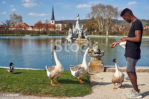 young Ethiopian feeds geese and ducks