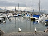 Switzerland, Geneva, swans stay on the water near the dock.\nClouds, buildings, boats and the famous Jet d'eau in the\nbackground.
