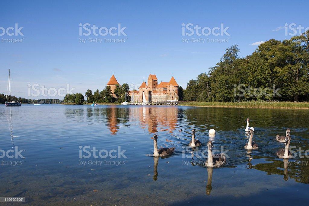 Swans near Trakai castle stock photo