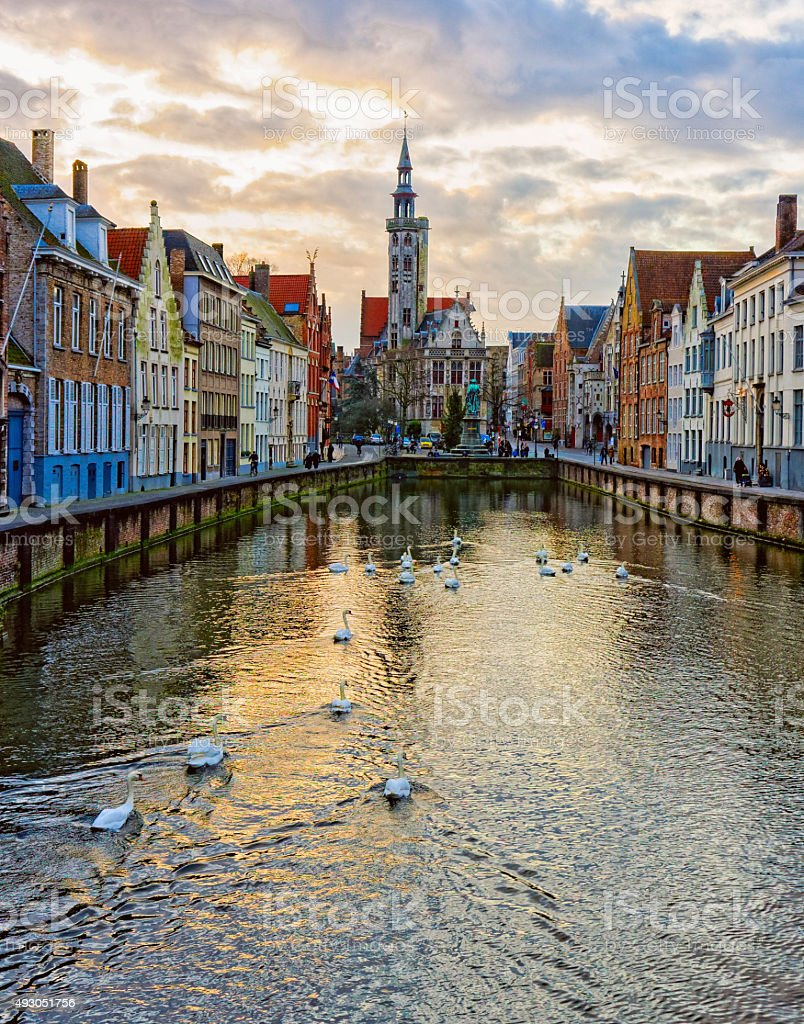 Swans on canals of Bruges, Belgium stock photo