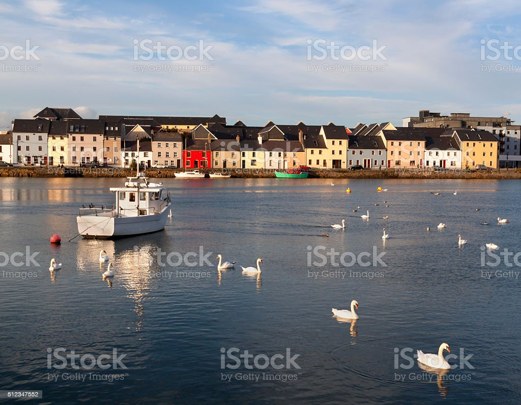 Swans on sea with ships and houses in the back stock photo