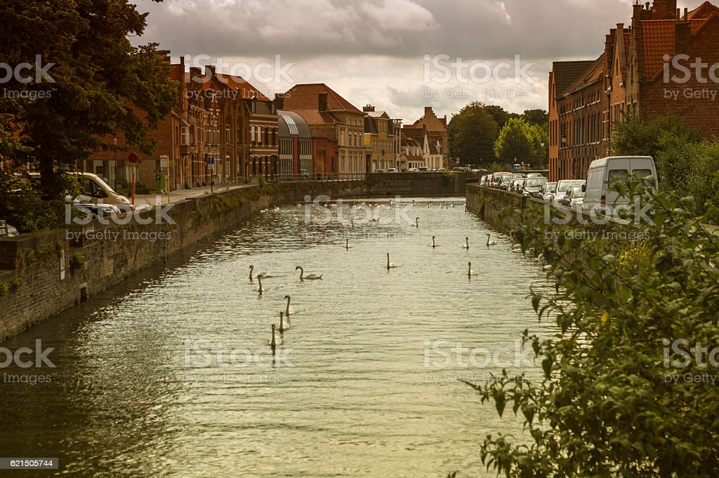swans swim at water channel in brugge belgium photo libre de droits