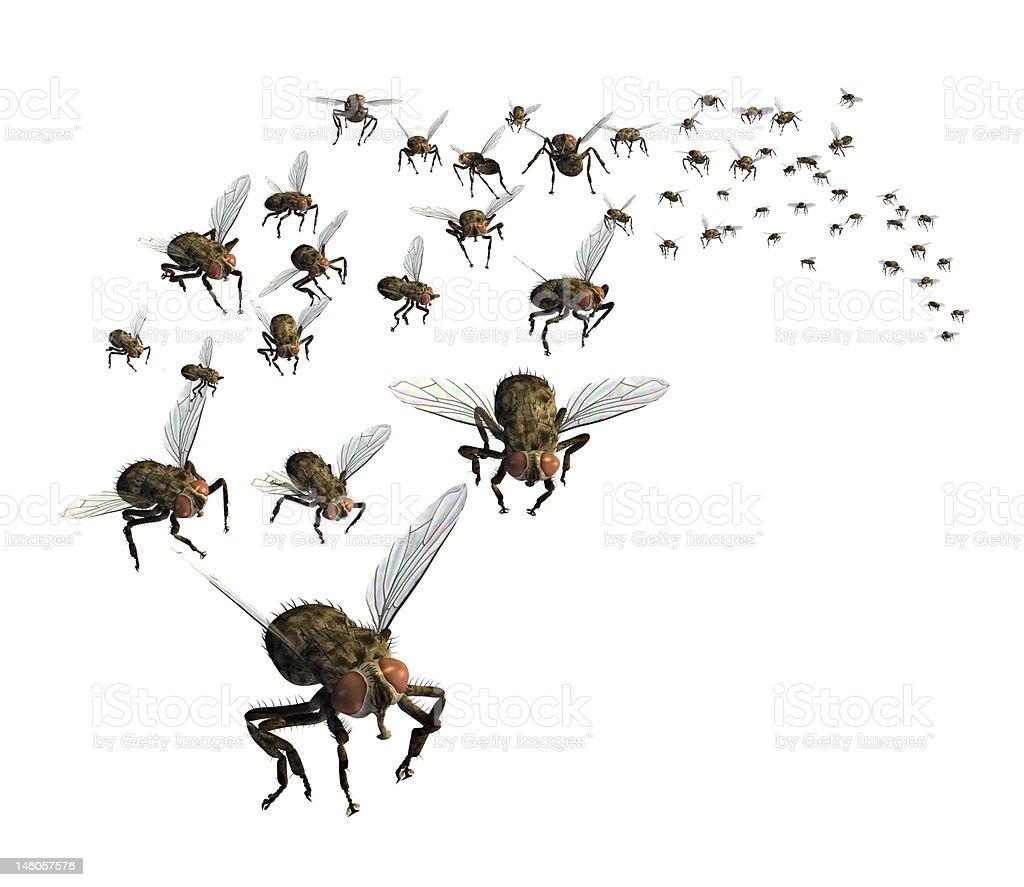 Swarm of Flies stock photo