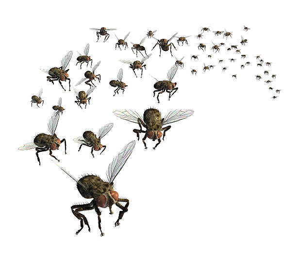 swarm of flies - swarm of insects stock photos and pictures