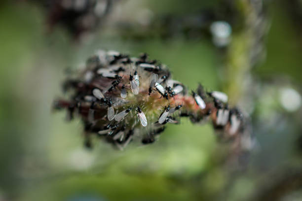 A swarm of flying ants gather on a flower plant stock photo