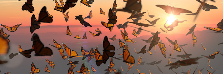 many swarming butterflies, panorama banner format