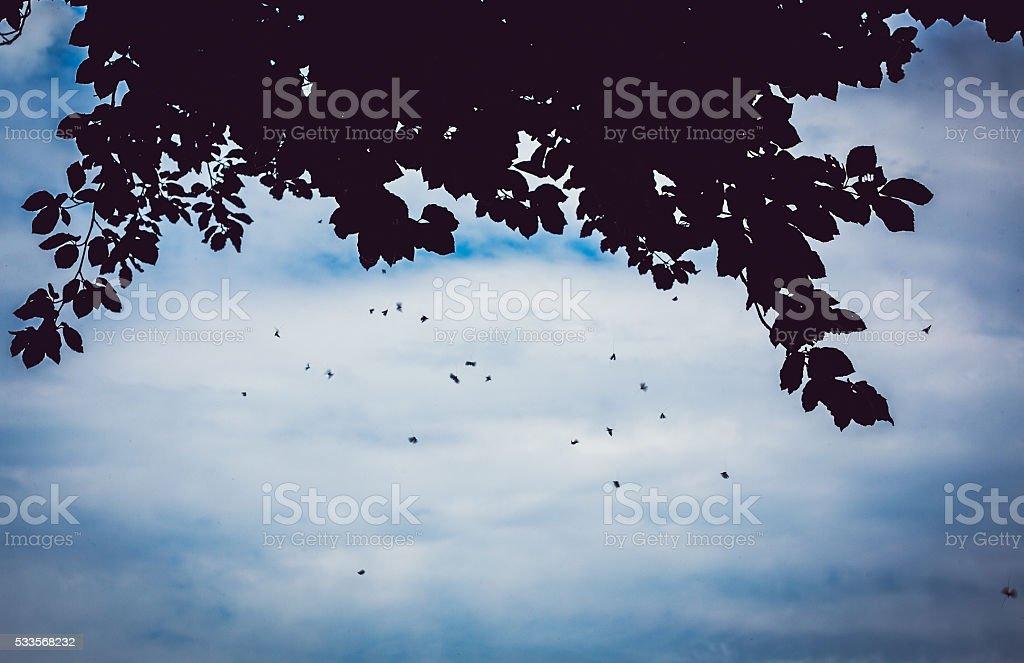 swarm of mosquitoes stock photo