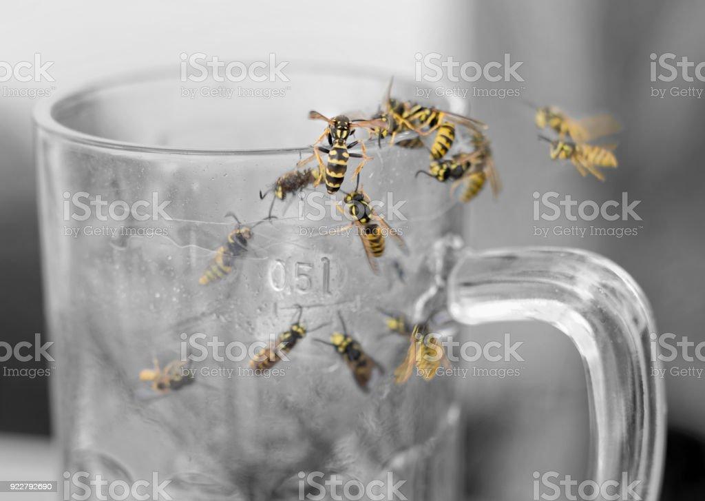 Wespenschwarm im leeren Glas Bier – Foto